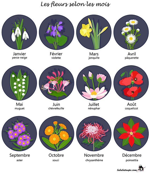 Les fleurs selon les mois lulu la taupe jeux gratuits for Les noms des fleurs