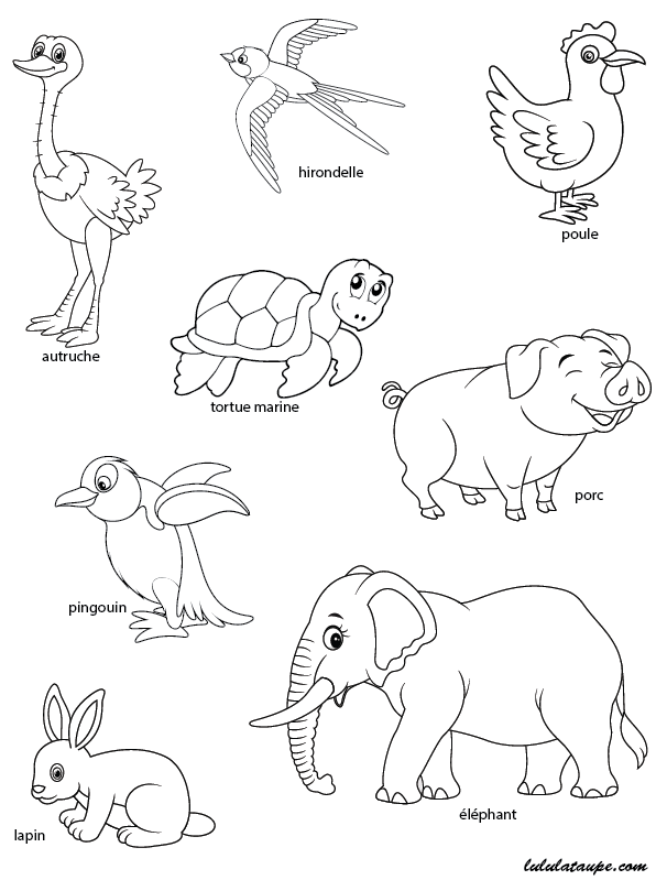 Les animaux qui pondent des u0153ufs, exercice u00e0 imprimer ...
