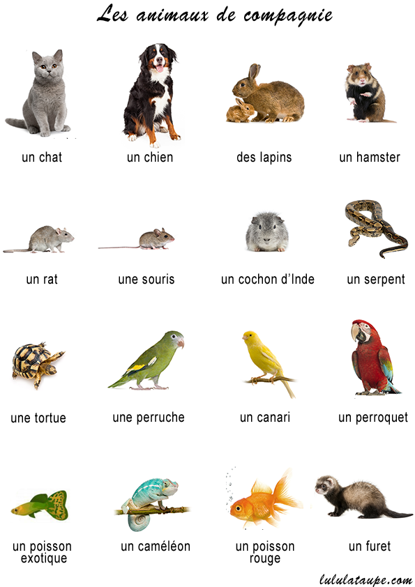 Sites de rencontres animaux de compagnie