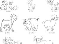 Les Animaux Lulu La Taupe Jeux Gratuits Pour Enfants