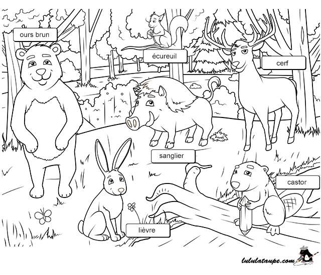 Les animaux de la for t fiche imprimer 1 lulu la - Coloriage de tous les animaux ...