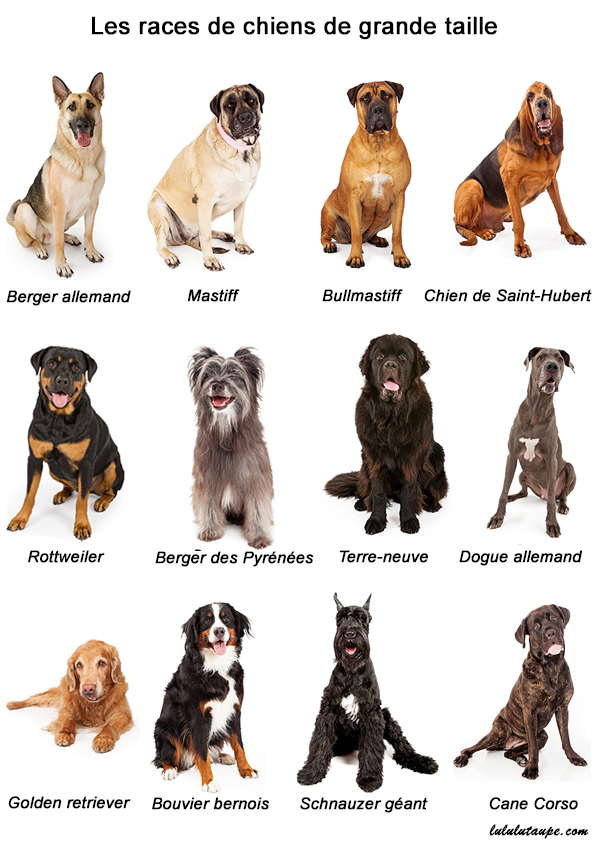 imagier les races de chiens lulu la taupe jeux gratuits pour enfants. Black Bedroom Furniture Sets. Home Design Ideas