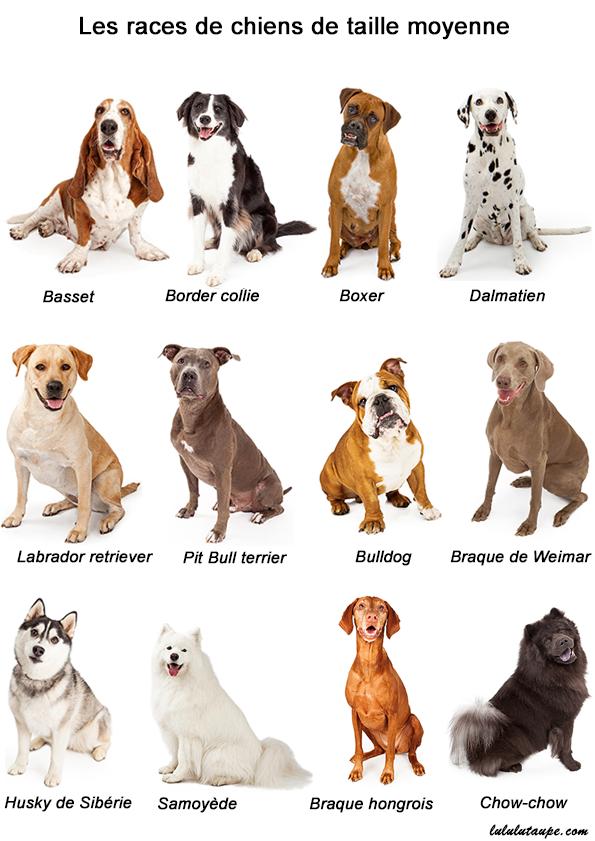 Imagier les races de chiens lulu la taupe jeux - Image de chien a imprimer ...