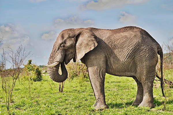 L'éléphant - Lulu la taupe, jeux gratuits pour enfants
