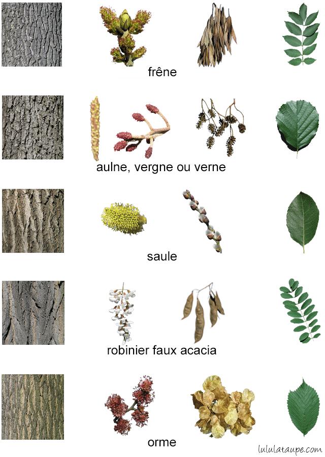 Reconna tre les arbres de la for t 3 lulu la taupe jeux gratuits pour enfants - Reconnaitre les arbres par leur tronc ...