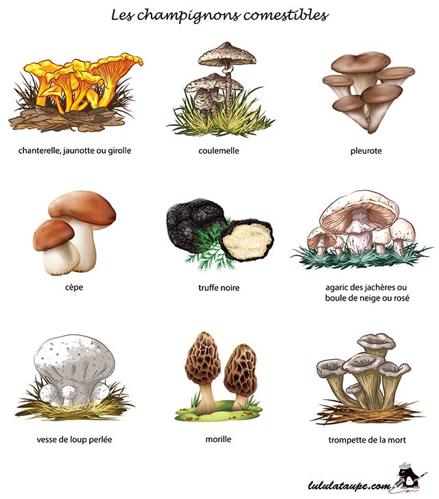Les champignons lulu la taupe jeux gratuits pour enfants - Dessin de champignons a imprimer ...