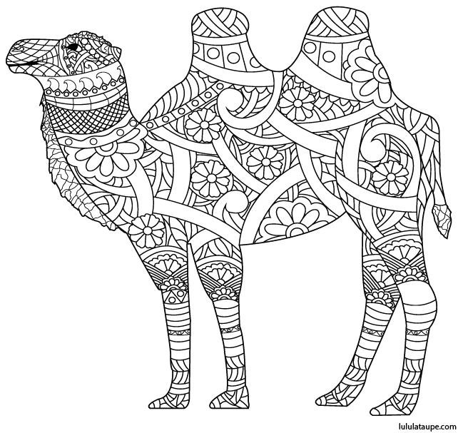 Coloriage antistress un chameau lulu la taupe jeux - Dessin de chameau ...
