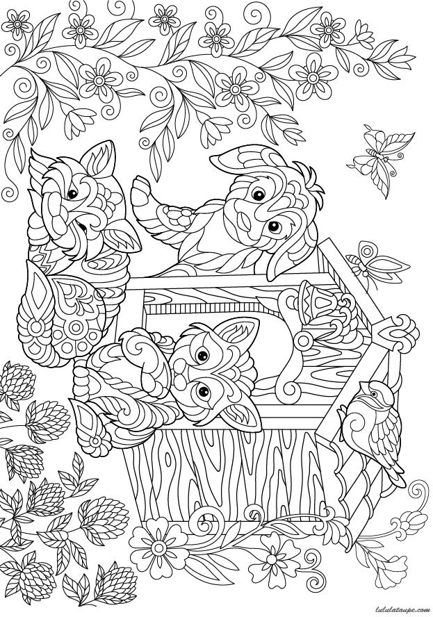Coloriage Chien Dans Sa Niche.Coloriage Pour Adultes Chien Et Chats Lulu La Taupe Jeux