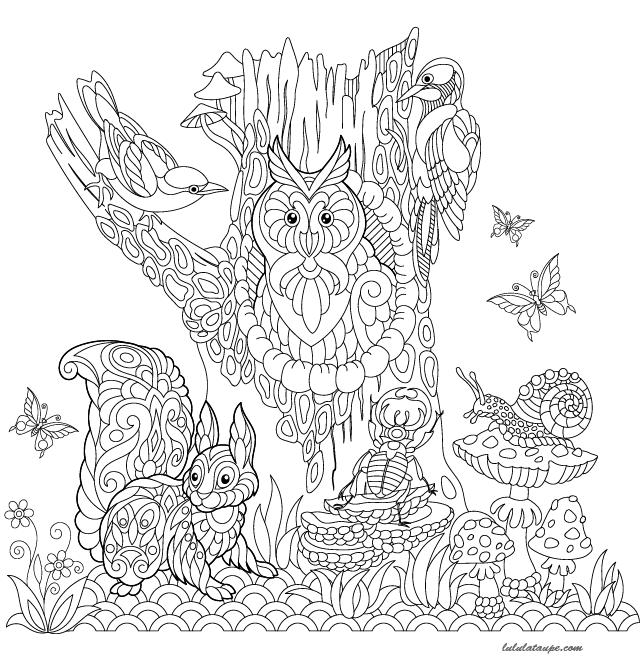 Coloriage les animaux de la for t lulu la taupe jeux - Mandala paysage ...