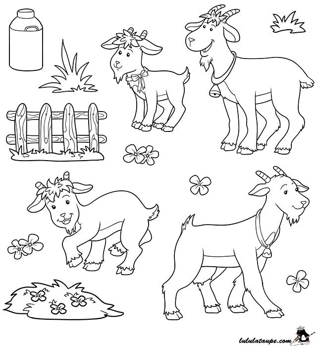 Dessin colorier les ch vres lulu la taupe jeux - Dessin mouton rigolo ...