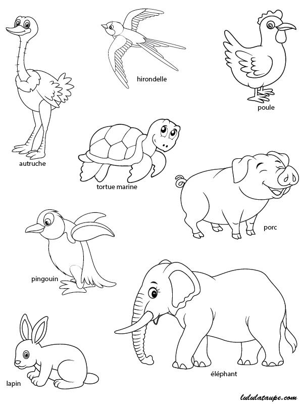 Favori Les animaux qui pondent des œufs, exercice à imprimer - Lulu la  XQ21
