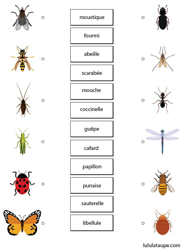 Les insectes exercice ludique imprimer lulu la taupe jeux gratuits pour enfants - Reconnaitre les insectes xylophages ...